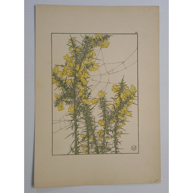 Art Nouveau Botanicals Prints - Pair - Image 4 of 4