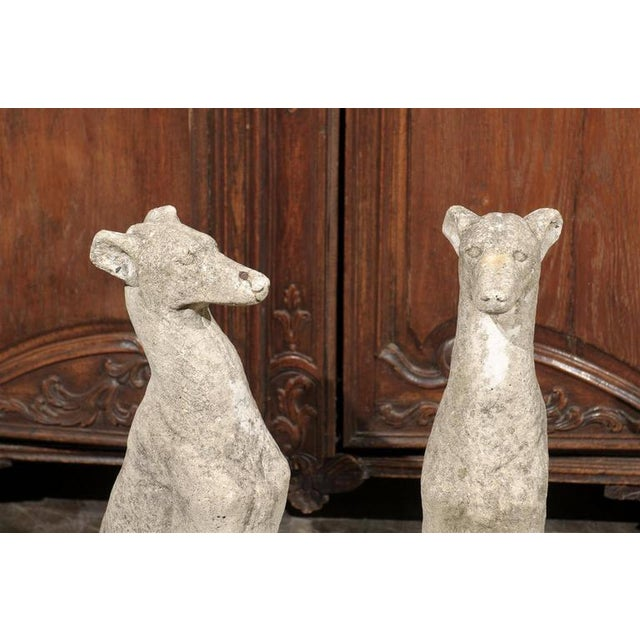 Pair of Vintage Carved Cement Greyhound Sculptures Sitting on Circular Bases - Image 6 of 9
