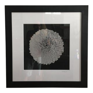 Vintage Framed Chrysanthemum Photograph