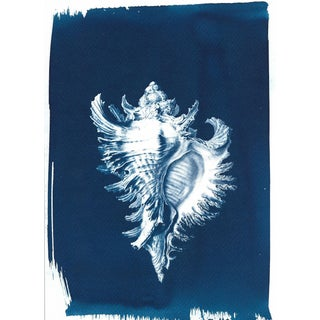 Ernst Haeckel Inspired Conch Shell Cyanotype Print