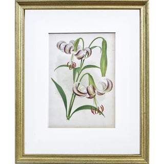 Antique Floral Botanical Color Lithograph Print of a Lily 1896