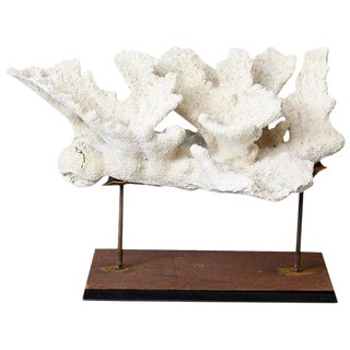 Large Vintage White Coral Specimen on Custom Made Iron Stand II