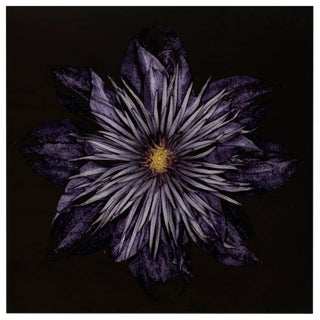 Carsten Witte, Clematis #5, 2013 - (limited edition)