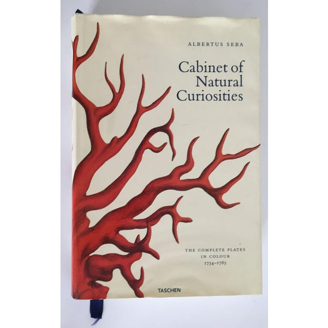 Cabinet of Curiosities by Albertus Seba - Image 2 of 11