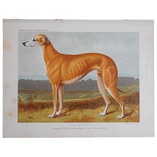 "Antique Dog Lithograph ""Greyhound"""