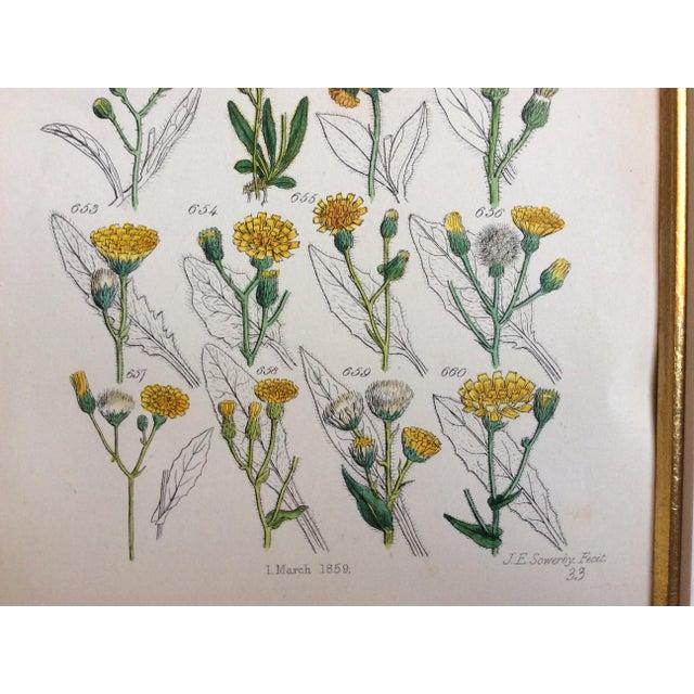 Botanical Prints C-1859 - A Pair - Image 5 of 9