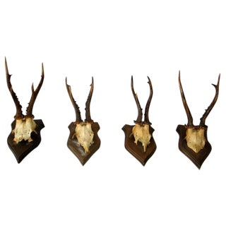 Collection of 20 Mounted Deer Antler / Horns