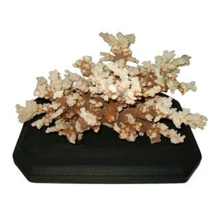 Decorative Coral Object