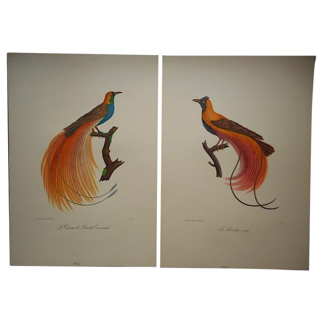 Vintage Tropical Bird Folio Size Lithographs- Pair - Image 1 of 3