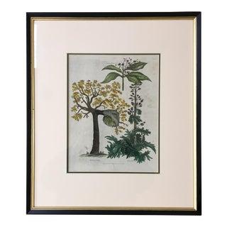 English Botanical Lithograph