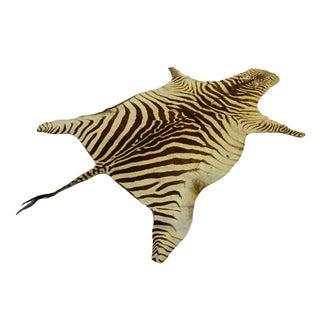 Authentic Vintage Zebra Hide Skin Rug - 5' x 8'