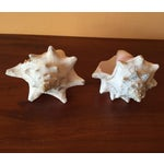 Image of Vintage Queen Conch Shells - A Pair