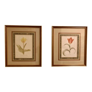 Circa 1929 Framed Antique Tulip Botanical Prints - A Pair