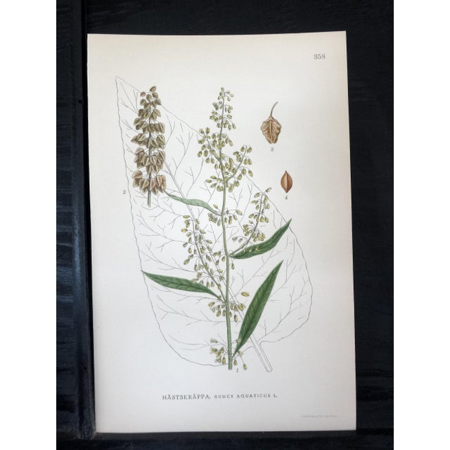 Swedish Floral Prints - Image 5 of 6