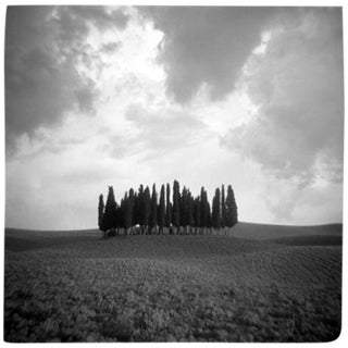 """Cypress Hill"" Black & White Photograph"