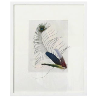 Framed Peacock Feather Art