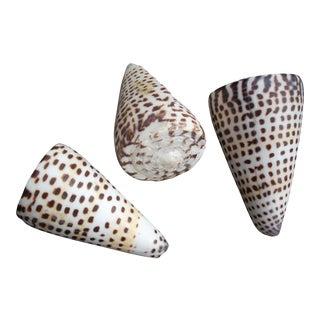 Natural Alphabet Cone Shells - Set of 3