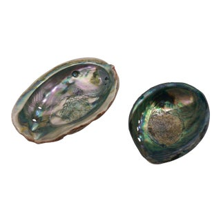 Small Abalone Sea Shells - Pair