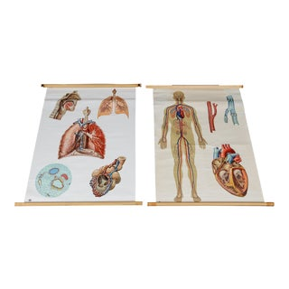 Vintage Circulatory and Respiratory Learning Poster - A Pair
