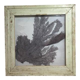 Natural Fuchsia Sea Fan Coral