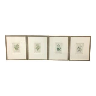 Anne Pratt Henredon Botanical Prints- Set of 4