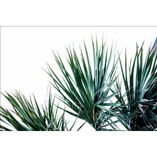 "Kaitie Bryant ""Partial Palms"" Photography"