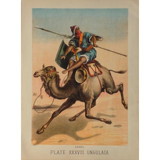 Antique Camel Lithograph by Henry Johnson