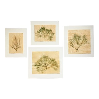 Blackwell Botanicals Natural Pressed Green Seaweed, Set of 4