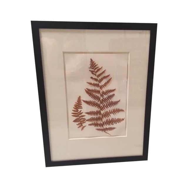Image of Natural Pressed Botanical in Frame
