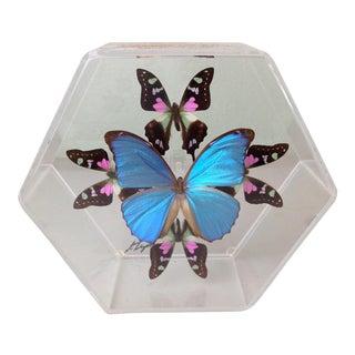 Real Butterfly Art Framed in Lucite Hexagon Case