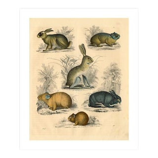 Antique 'Small Animals' Archival Print
