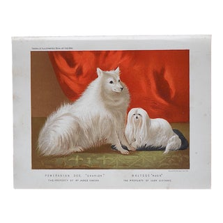Antique Dog Lithograph - Pomeranian & Maltese