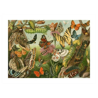 Antique 'Insects & Caterpillars' Archival Print