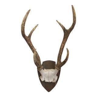 Deer Antlers in Cast Resin