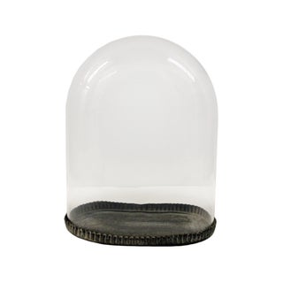 Glass Dome With Tin Base