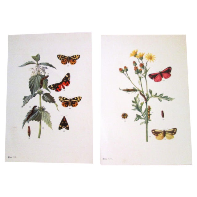 1903 Butterfly & Botanical Prints - Pair - Image 1 of 8