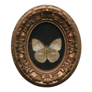 Natural Preserved Butterfly Art