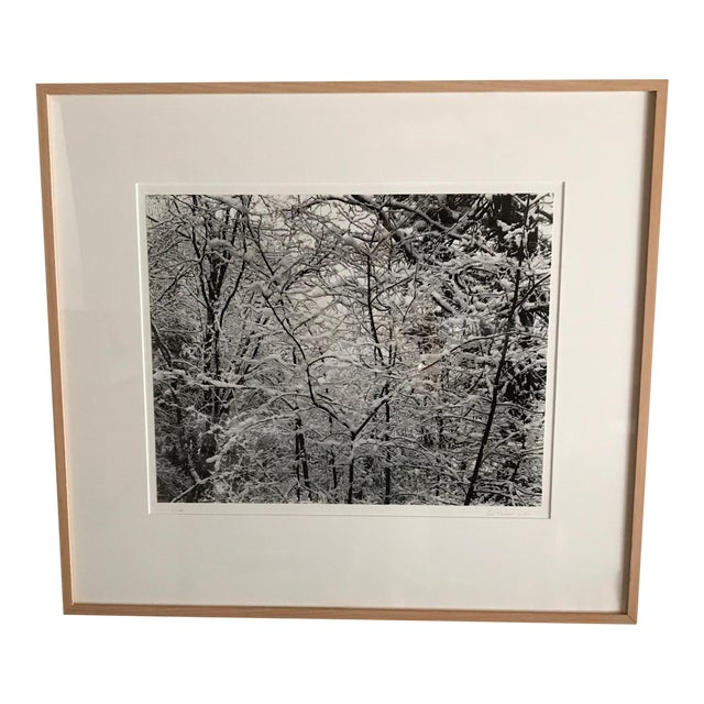 Trees in Snow Photography - Image 1 of 3