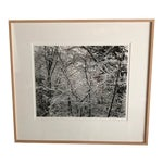 Image of Trees in Snow Photography