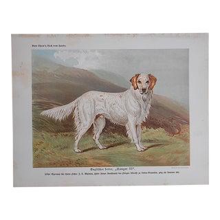 "Antique Dog Lithograph ""English Setter"""