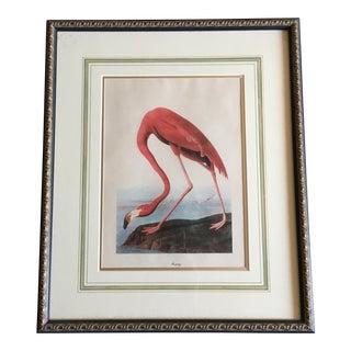 Vintage Audubon Flamingo Print