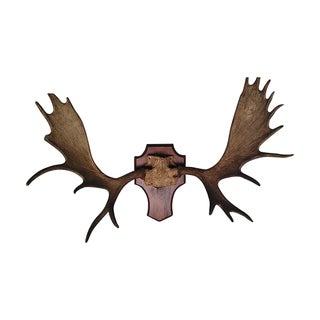 Moose Antler Rack