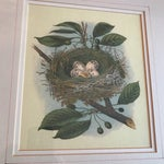 Image of Vintage Bird Nest & Eggs Framed Print