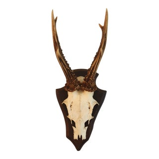 Black Forest Roe Antlers Plaque