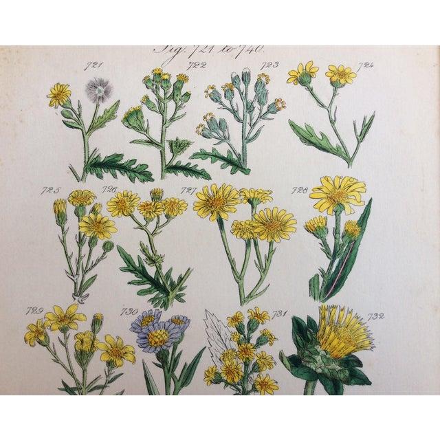 Botanical Prints C-1859 - A Pair - Image 6 of 9