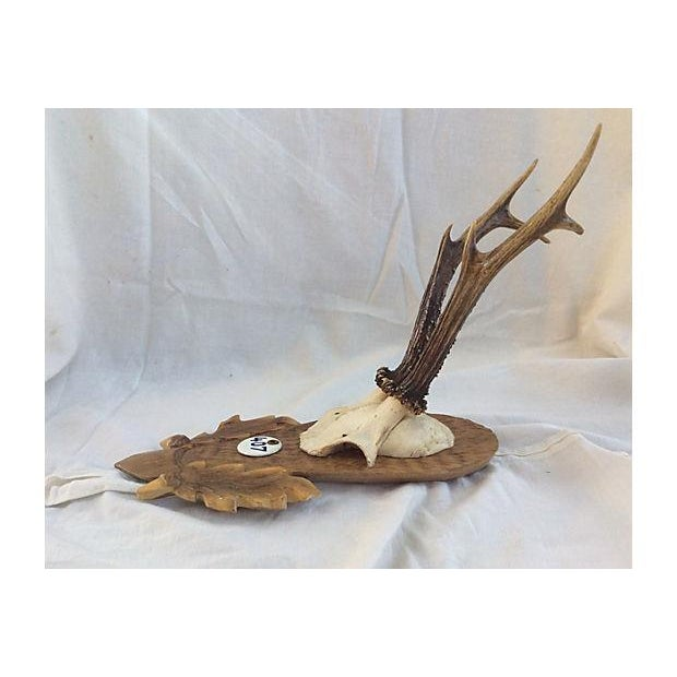 Black Forest Deer Horn Trophy Mount - Image 5 of 5