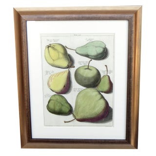 18th C. Pears Engraving