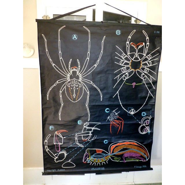 French Vintage Chalk Plate Garden Spider - Image 6 of 8