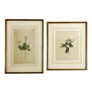 1823 Botanical Engravings - a Pair