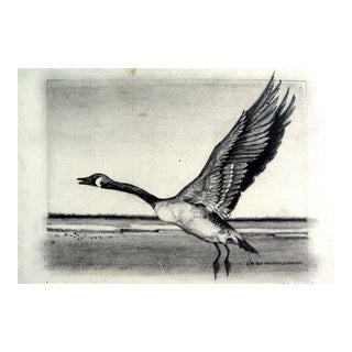 Canadian Goose Pencil Study Drawing